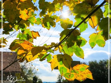 Autumn-1