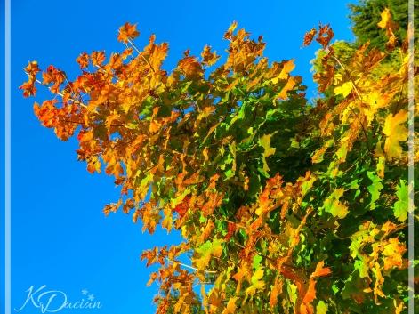 Autumn_-1